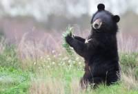 В леса Коми после курса реабилитации вернулся осиротевший медвежонок