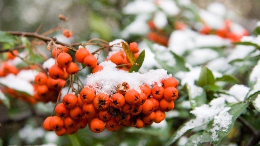 Стало известно, когда жителям Центральной России ждать первый снег