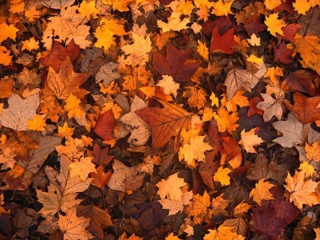 Врач раскрыл опасность опавшей листвы для здоровья