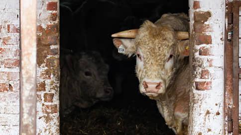 Животноводам покажут породу // Владельцы «Дамате» купят разработчика систем селекции