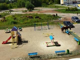 Табун лошадей оккупировал детскую площадку в Челябинской области