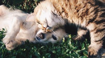 Совфед одобрил закон о запрете изымать домашних животных за долги