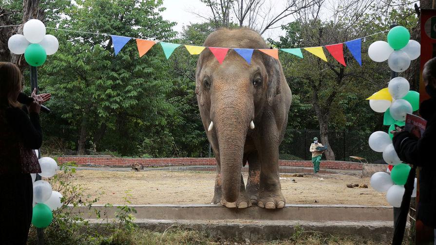'Самый одинокий слон в мире' будет искать пару в Камбодже