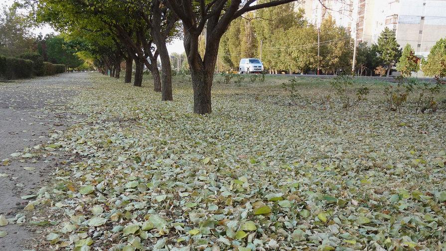Иммунолог предупредил об опасности опавших листьев