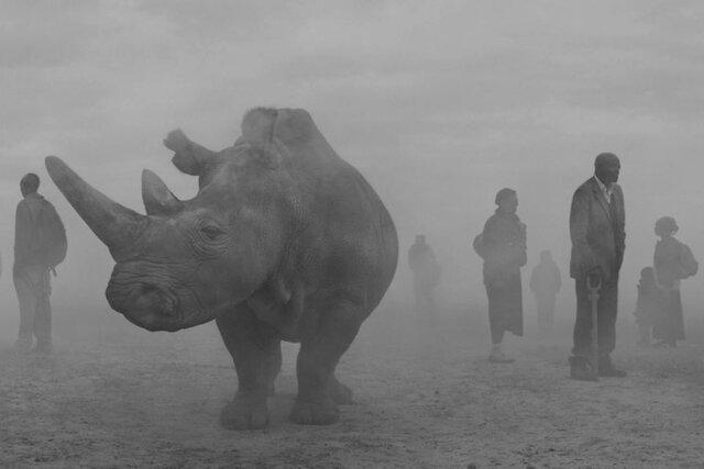 Климатический кризис разрушает привычную жизнь в Африке. Ник Брандт несколько месяцев фотографировал пострадавших людей и животных вместе. Посмотрите его фотографии